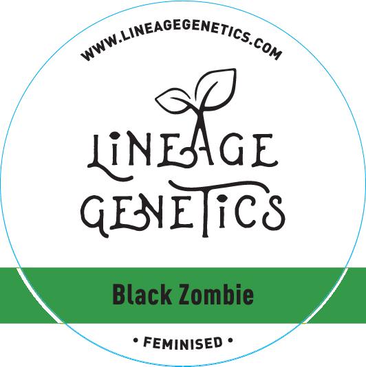 Lineage Genetics Feminized Black Zombie
